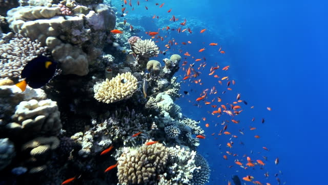 blue hole coral - dahab, egypt - rotes meer stock-videos und b-roll-filmmaterial