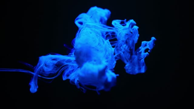 blue ink splash on black background - swirl stock videos & royalty-free footage