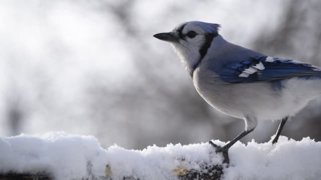 blue jay eating on snowy feeder - slippery stock videos & royalty-free footage