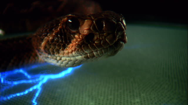 a blue light flickers beneath a rattlesnake. - viper stock videos & royalty-free footage