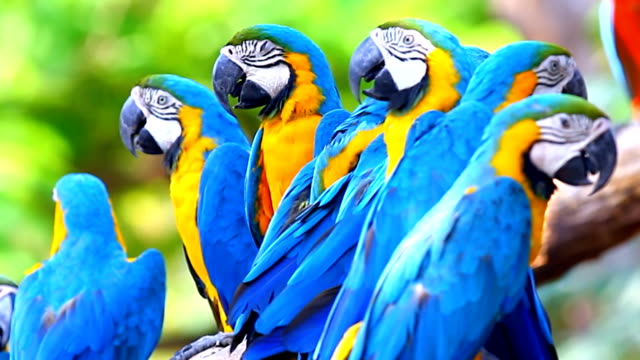 blue macaw - multi coloured stock videos & royalty-free footage