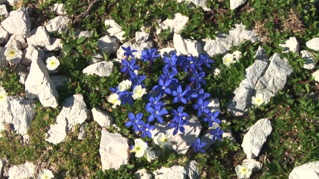 HD: Blue mountain flowers