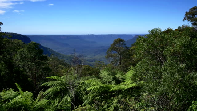 blue mountains, nsw, australia - tropical rainforest stock videos & royalty-free footage