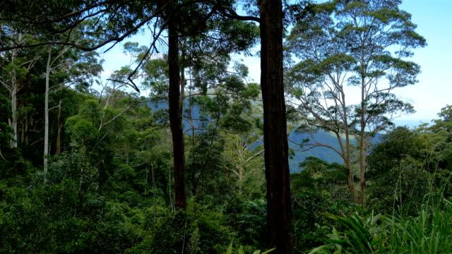 vídeos de stock, filmes e b-roll de montanhas azuis, nsw - alto descrição geral