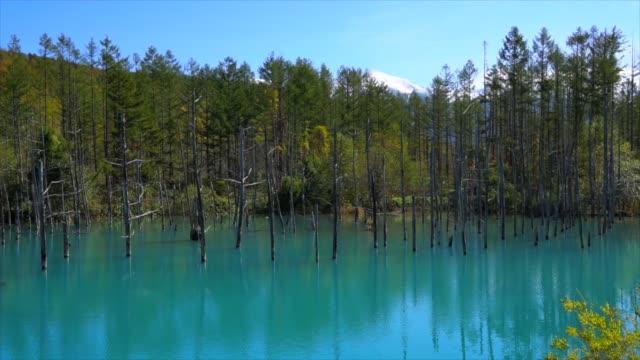 blue pond(aoiike),hokkaido - biei town stock videos & royalty-free footage