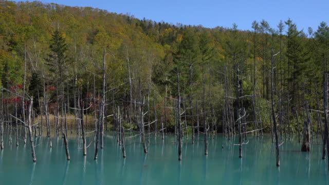 blue pond(aoiike),hokkaido - asahikawa stock videos & royalty-free footage