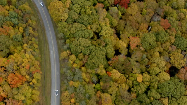 blue ridge parkway in the fall - country road stock videos & royalty-free footage