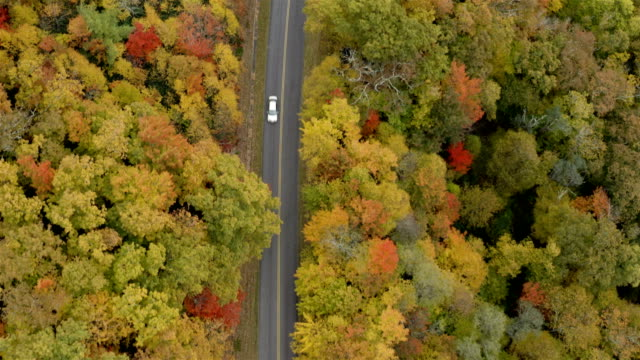 blue ridge parkway in the fall - lush foliage stock videos & royalty-free footage