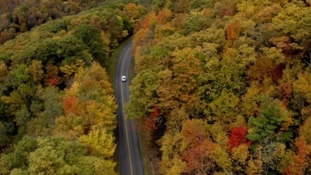 vídeos de stock e filmes b-roll de blue ridge parkway in the fall - outono