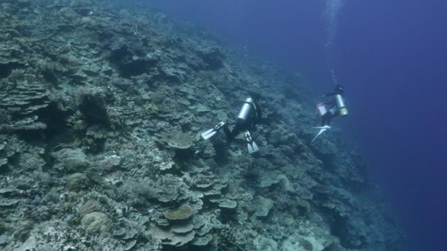 Blauwe zee, koraal rif, onderwater