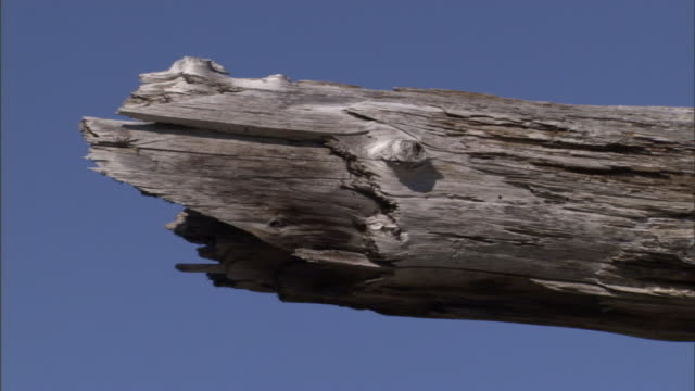 blue skies surround a jagged, weathered tree stump. - weathered stock videos and b-roll footage