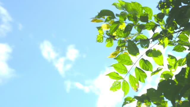 vídeos y material grabado en eventos de stock de ฺ cielo azul y hojas verdes - rama parte de planta
