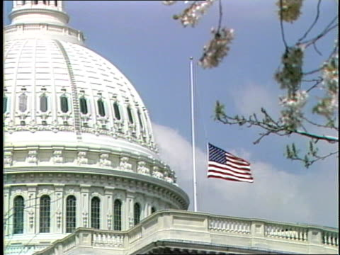 blue sky and tree branch tree branch with flower blossoms and clouds in sky us capitol dome and building with us flag at halfstaff american flag at... - capitol building washington dc stock videos & royalty-free footage