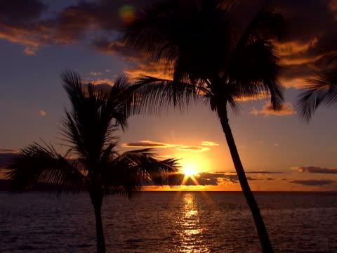 vídeos de stock, filmes e b-roll de blue sky at sunset - árvore tropical