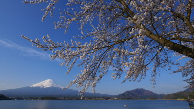 vídeos y material grabado en eventos de stock de blue sky mt fuji and cherry blossom dolly motion in lake kawaguti - punto de referencia natural