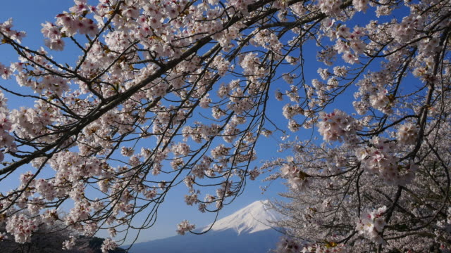 blue sky mt fuji and cherry blossom dolly motion in lake kawaguti - satoyama scenery stock videos & royalty-free footage