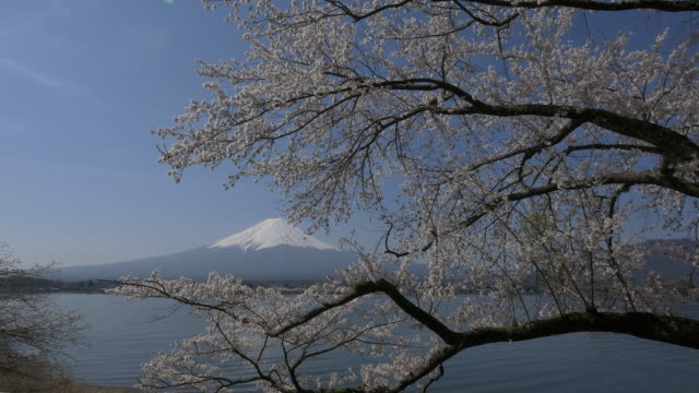 stockvideo's en b-roll-footage met blue sky mt fuji and cherry blossom dolly motion in lake kawaguti - verwonderingsdrang