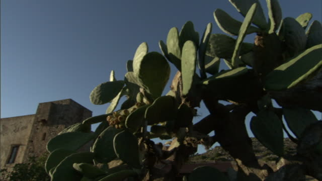 a blue sky outlines a cactus near a building in greece. - cactus stock-videos und b-roll-filmmaterial
