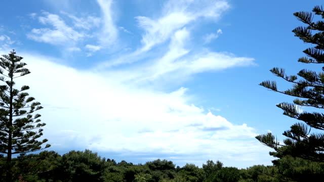 Cielo azul sobre bosque