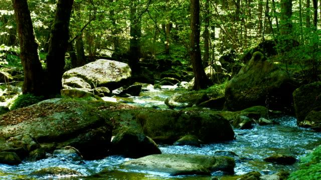 vídeos de stock, filmes e b-roll de blue stream na spring forest (4 km/uhd para hd) - floresta da bavária