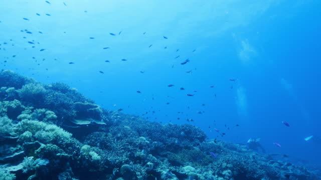 Blauwe onderzeese koraalrif