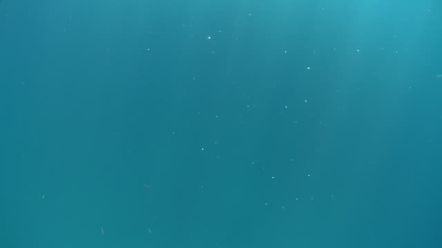 stockvideo's en b-roll-footage met ms blue water and shimmering flakes / playa del carmen, isla mujeres, mexico - plankton