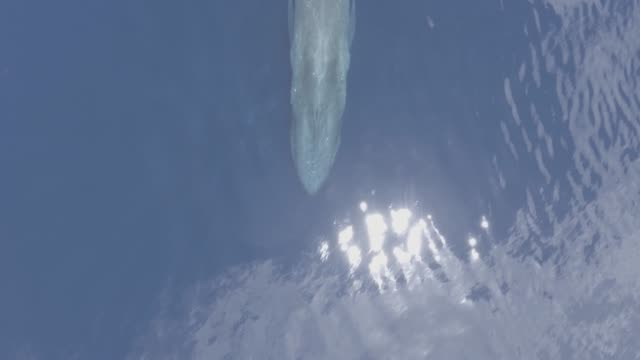 blue whale, aerial, timor leste - blue whale stock videos & royalty-free footage