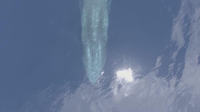 blue whale aerial, timor leste - blauwal stock-videos und b-roll-filmmaterial
