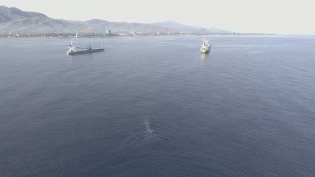 blue whale and boats, timor leste - blauwal stock-videos und b-roll-filmmaterial