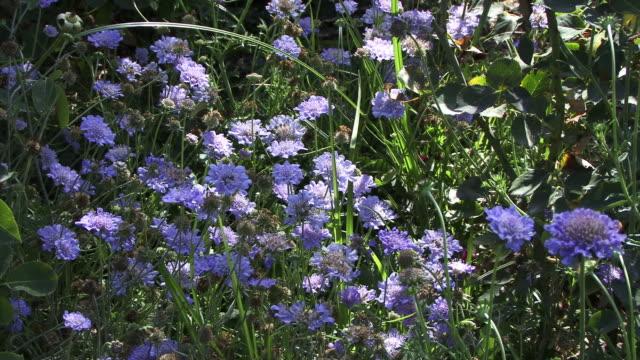 Blue wildflowers bloom in dappled sunlight.