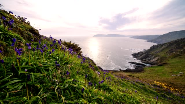bluebell time lapse - cornwall england stock videos & royalty-free footage