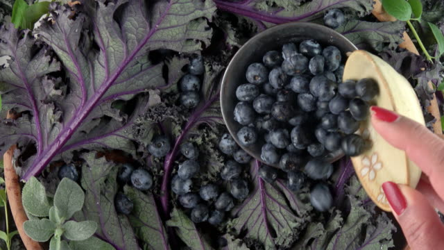 blueberries on organic purple leaf greens background - blueberry stock videos & royalty-free footage