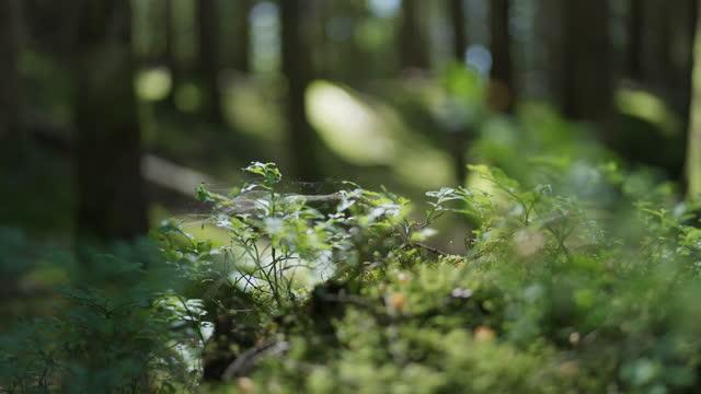 風の中を動くブルーベリー植物 - 木肌点の映像素材/bロール