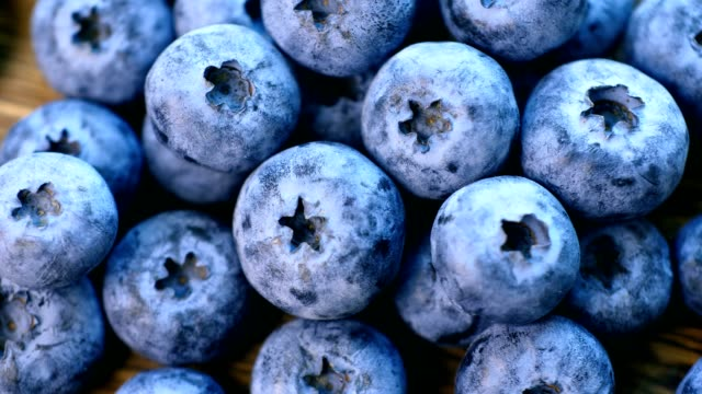 blueberry - blueberry stock videos & royalty-free footage