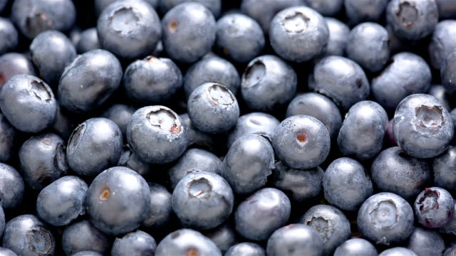 blueberry - blueberry stock videos and b-roll footage