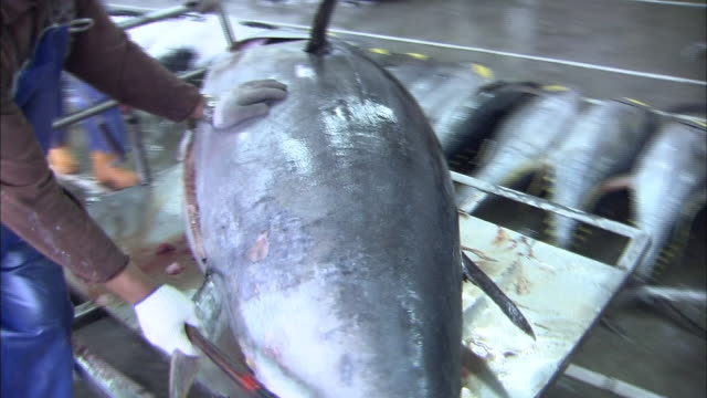 Bluefin tuna carried on a cart at the fish market in Taiwan