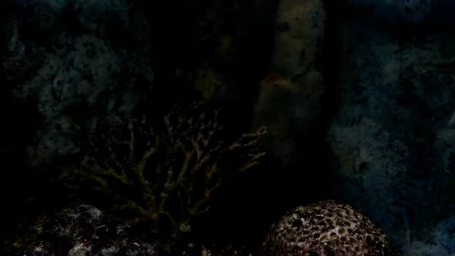 blue-spotted fantail ray - bluespotted stingray stock videos & royalty-free footage