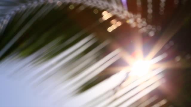 vidéos et rushes de blur belle lumière du soleil bokeh qui se trouve à travers les cocotiers à la plage en été - tropical