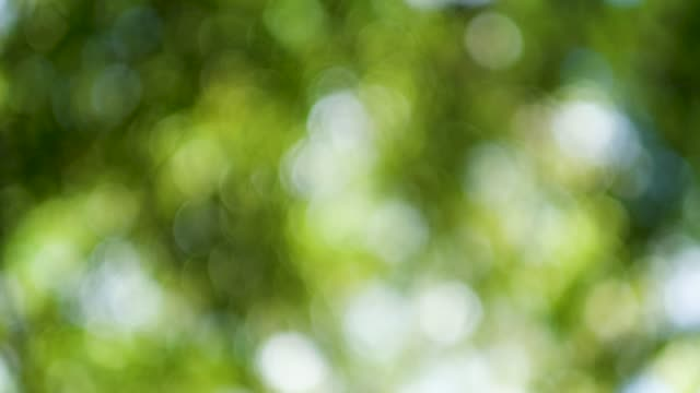 blur green tree bokeh background in sunny day - softness stock videos & royalty-free footage