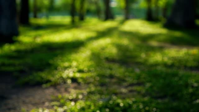vídeos de stock, filmes e b-roll de borrão de tiro floresta, jardim ou parque na natureza - jardim clássico