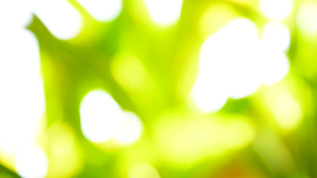 vídeos y material grabado en eventos de stock de borrosa fondo: abstract green nature - full hd format