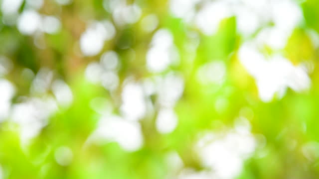 blurred background: abstract green nature - full hd format stock videos & royalty-free footage