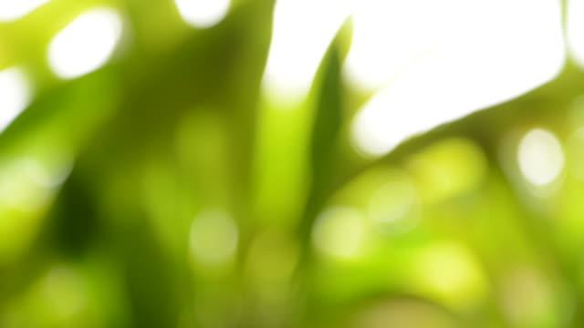 vídeos de stock, filmes e b-roll de fundo desfocado: fundo verde natureza - full hd format