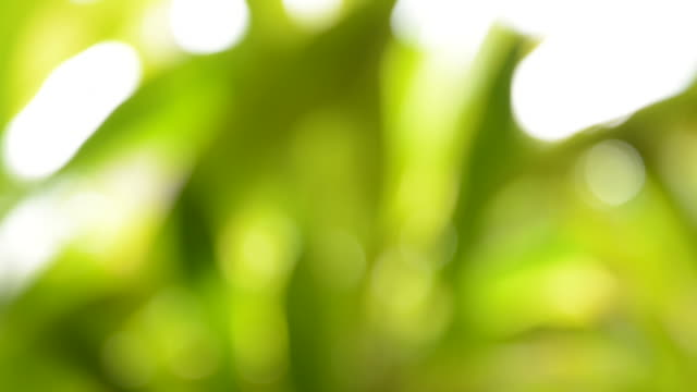 blurred background: abstract green nature - full hd format stock videos and b-roll footage