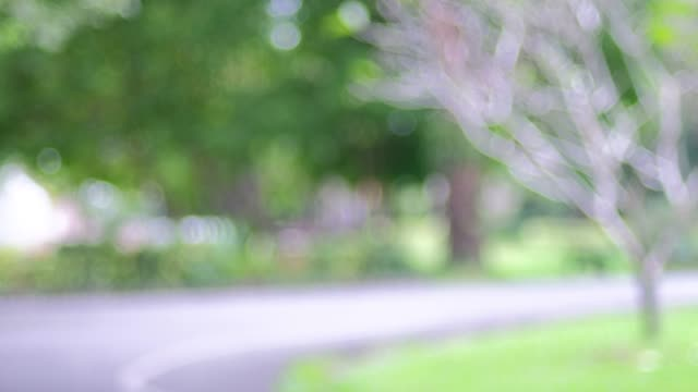 vídeos y material grabado en eventos de stock de fondo borroso, personas ejercen en parque verde con la luz del bokeh. concepto de estilo de vida saludable - parque natural