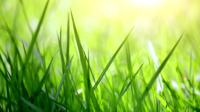 blurred close-up grass - blade of grass stock videos and b-roll footage