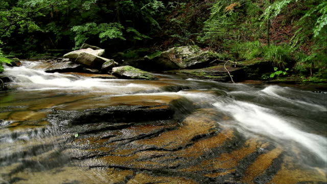 blurred forest river - mgost stock videos and b-roll footage