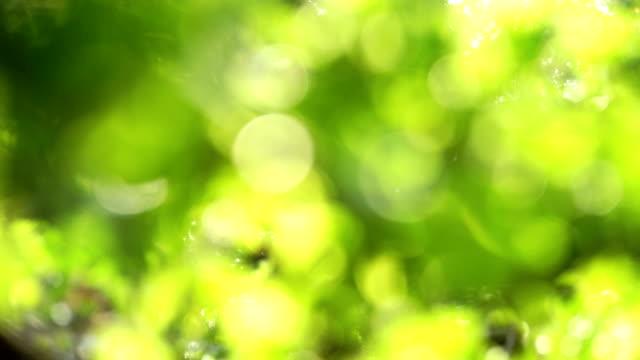 Verschwommene grünem Hintergrund