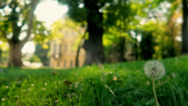 blurred green grass with tree background bokeh and flare - stock video - low angle view stock videos & royalty-free footage