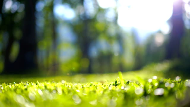 Blurred green grass with tree background bokeh and flare